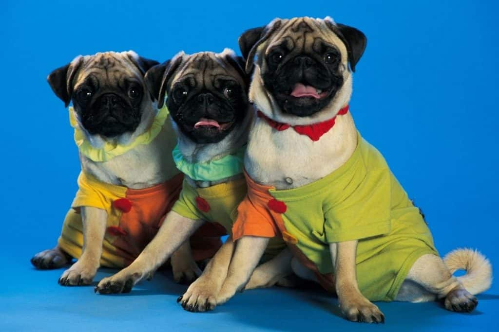 Things dogs hate: 2 dogs dressed up