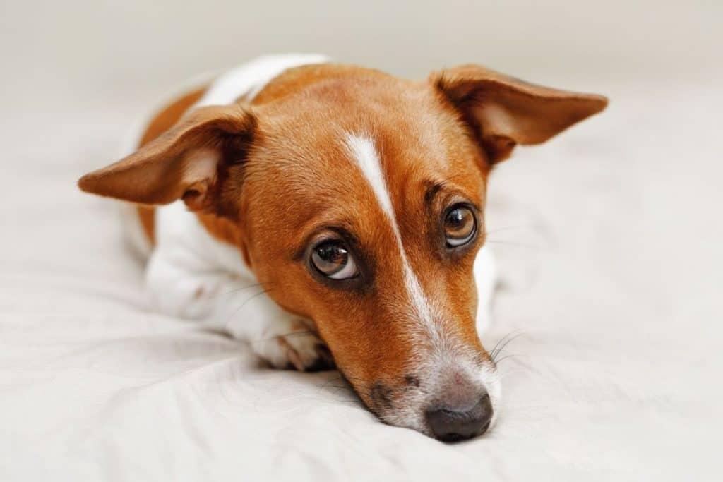 Things your dog hates: lonely, sad-eyed dog