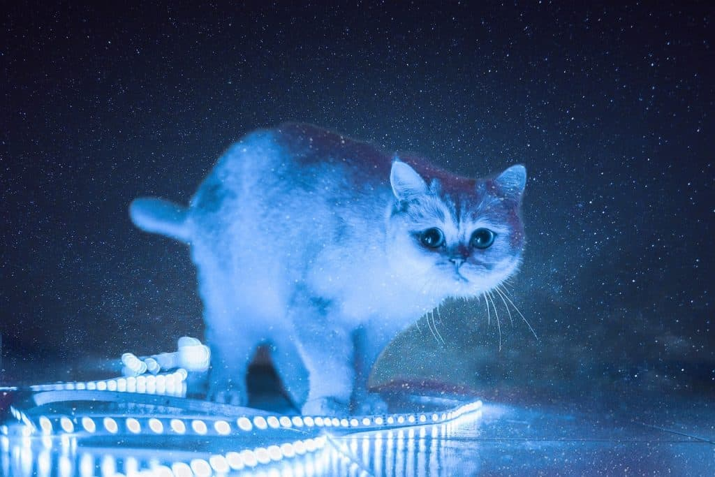 A cat in the dark with LED lights