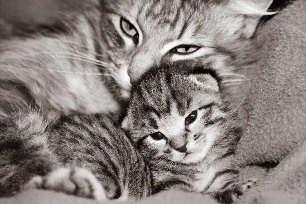Can kittens stay with their mothers forever?