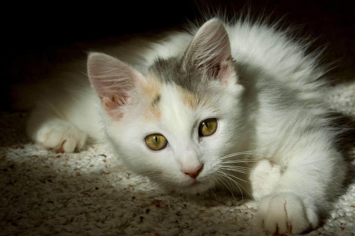 A kitten in a dark room