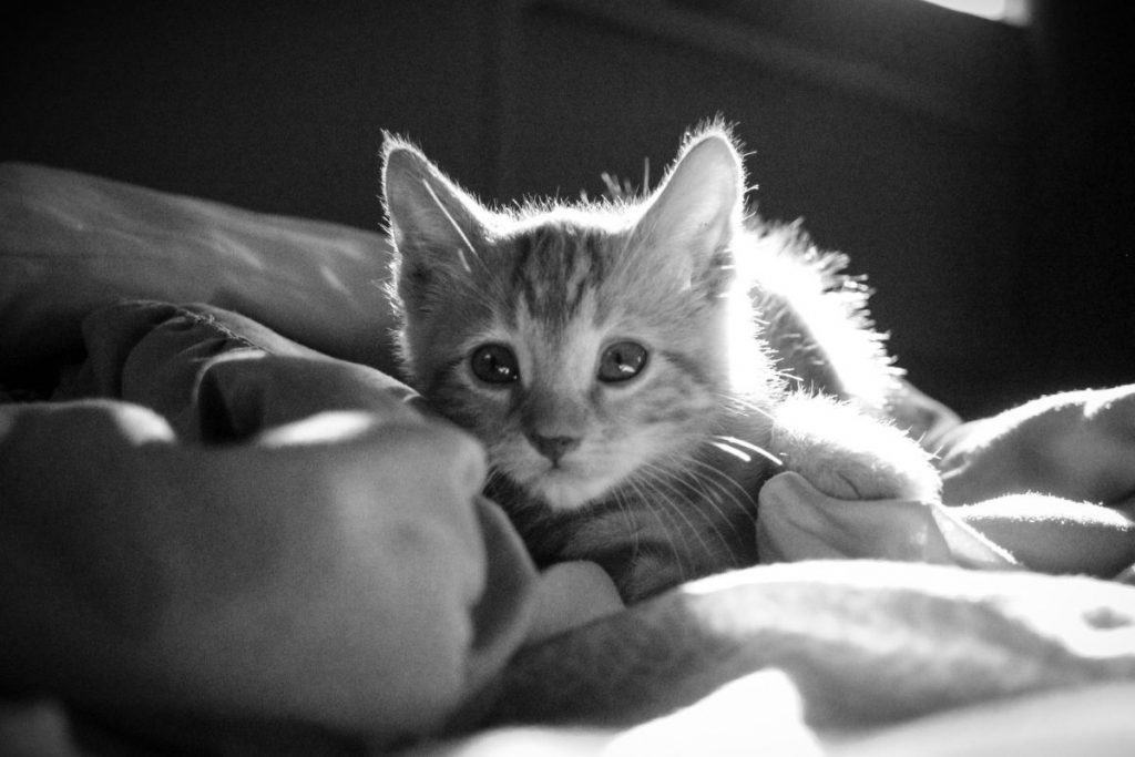Kittens might sleep on your bed at night