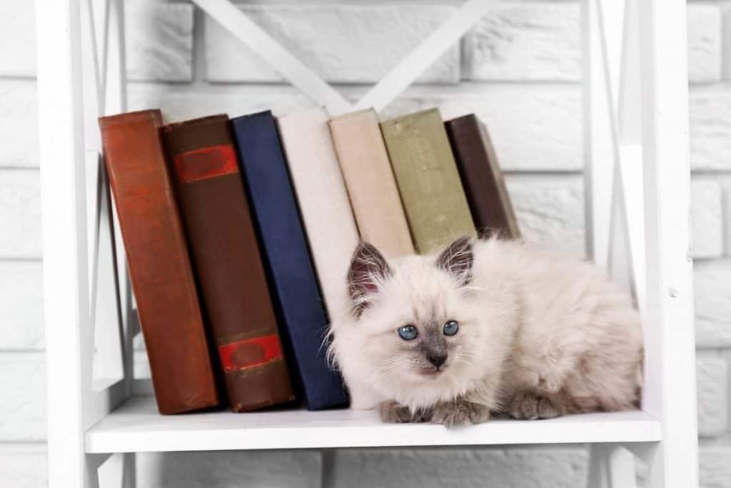 A kitten sitting on a bookshelf