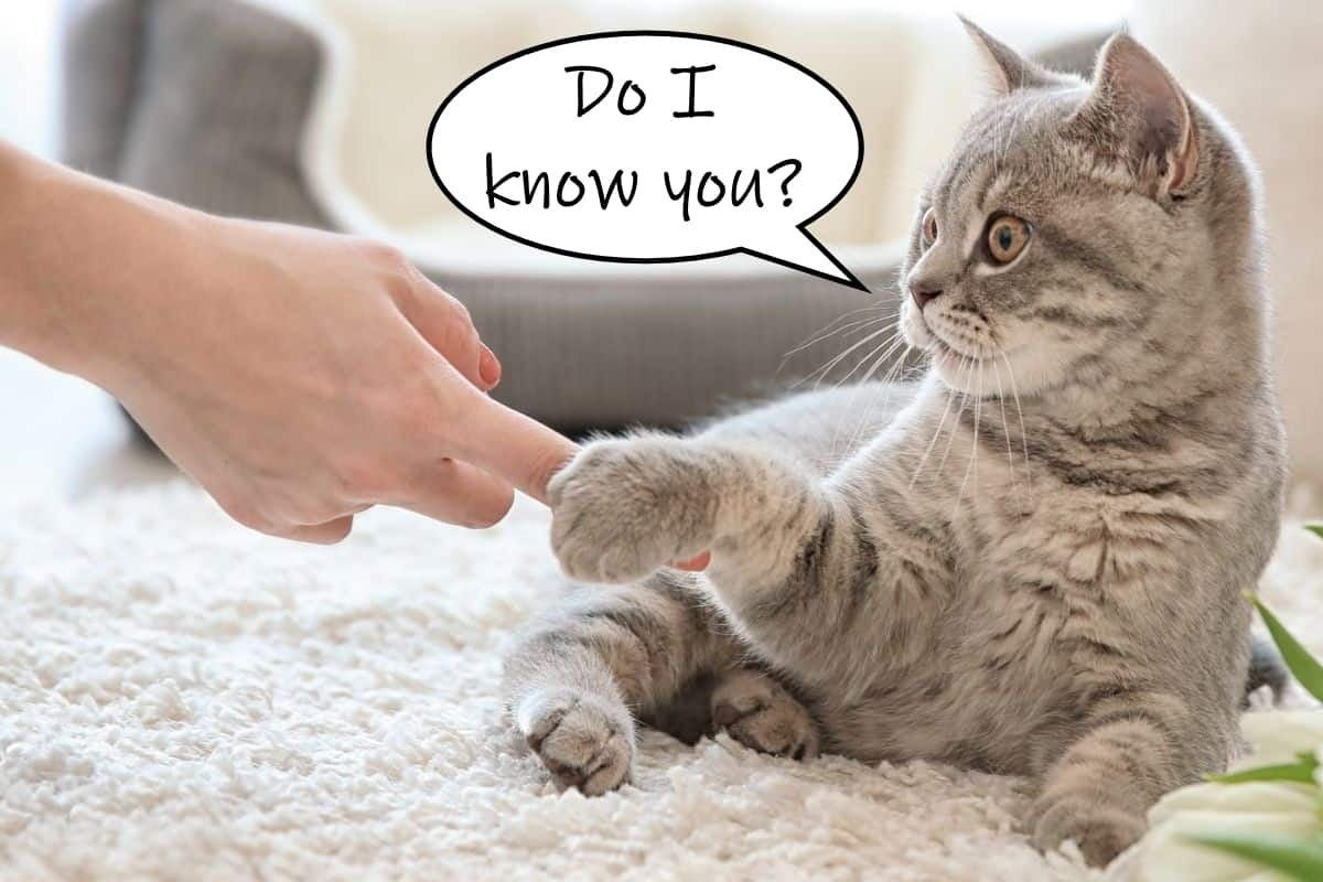 cat asking if he knows the person touching his paw