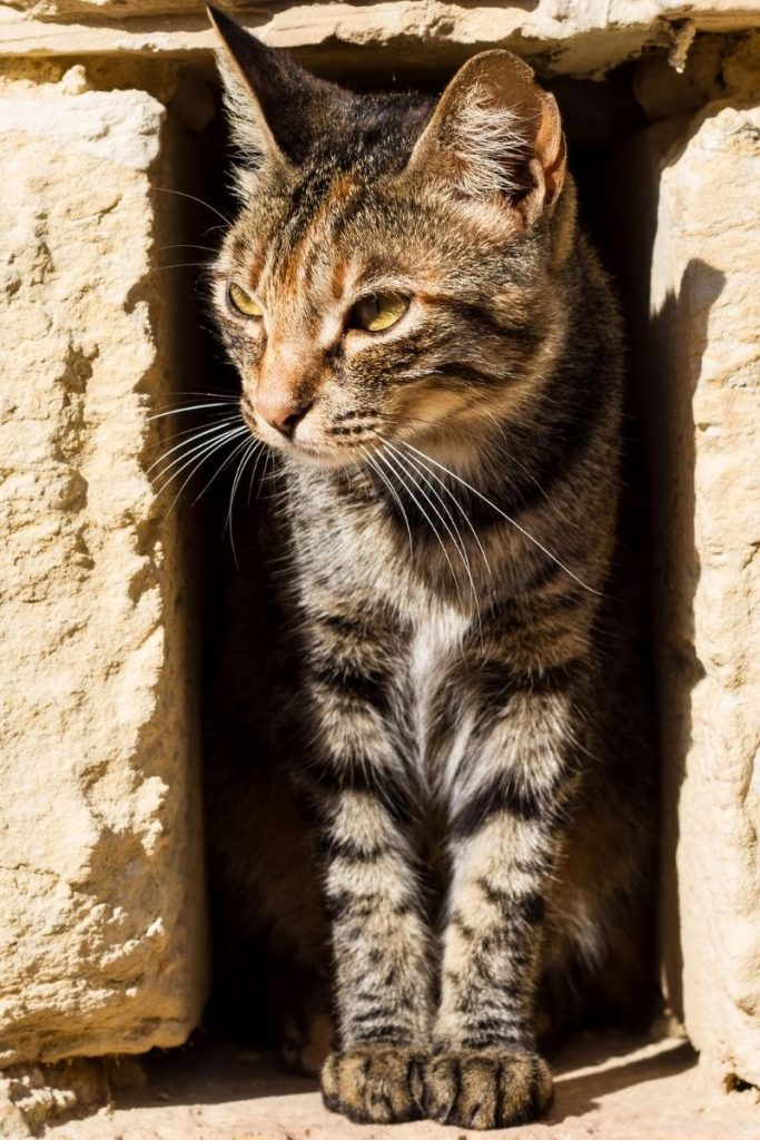 A cat hiding in a hole in a wall.