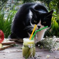 A black and white cat with a glass of apple juice to drink.