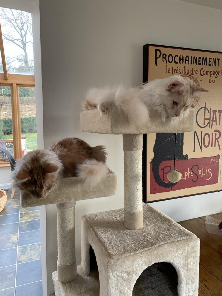 Two kittens in a cat tree.