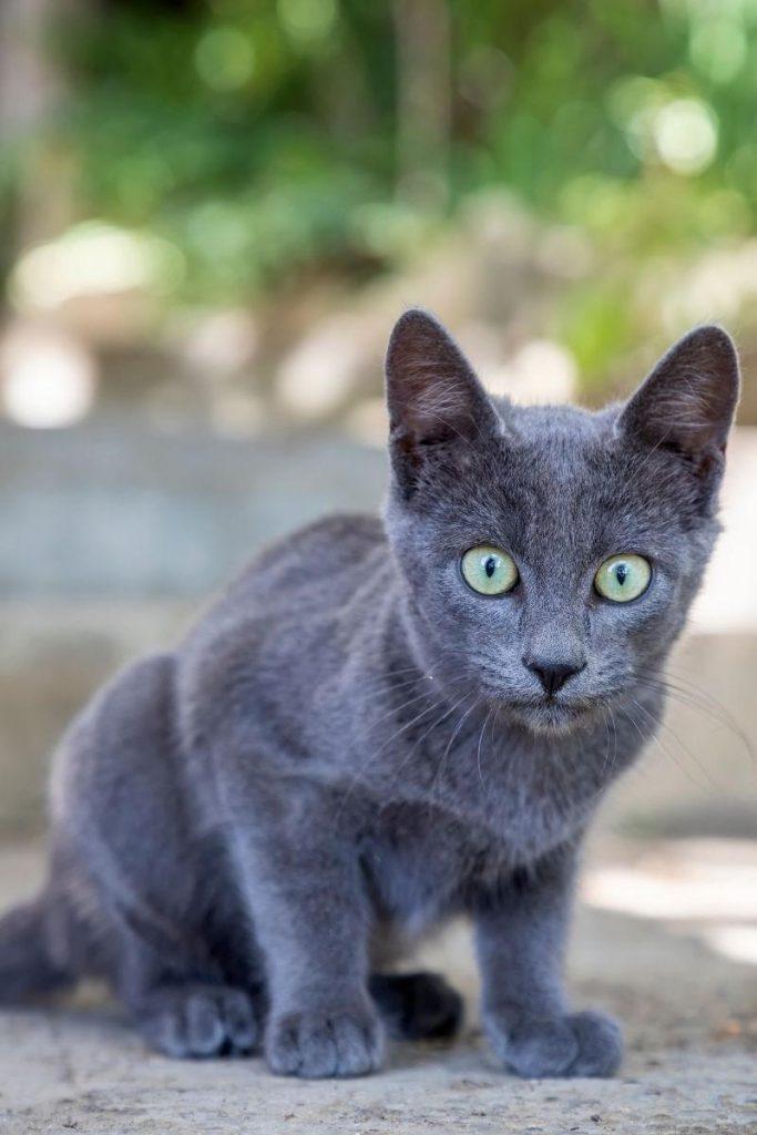 A grey kitten looking nervous.