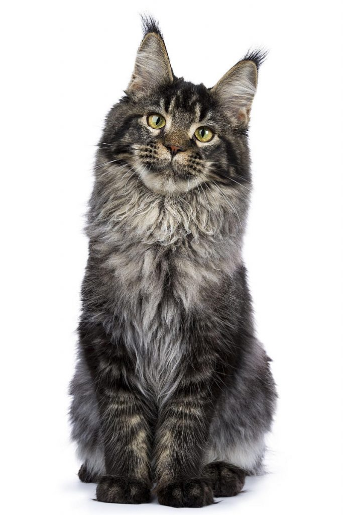 A seated tabby cat with a clear M on its forehead.
