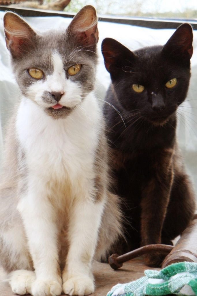 Two cats sitting together.