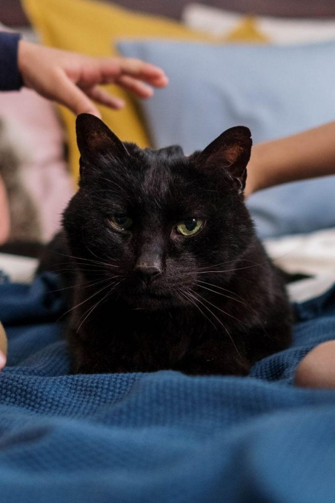 A black cat with children's hands about to stroke it.