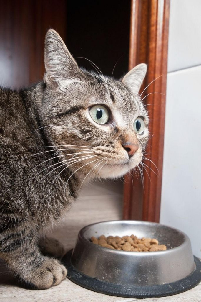 A cat that looks shocked about its food.