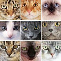 Nine different cat faces.