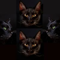 Four black cat faces in the style of Queen's Bohemian Rhapsody single