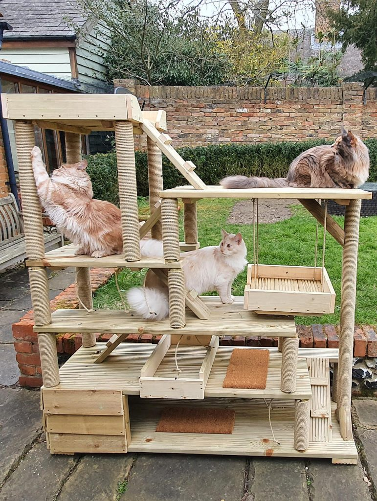 Three Maine Coons outside on a climbing frame.