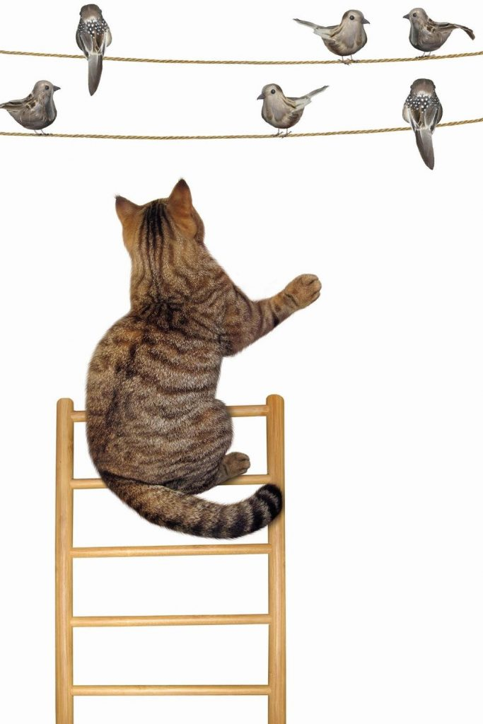 A cat on a ladder looking at birds on washing lines.