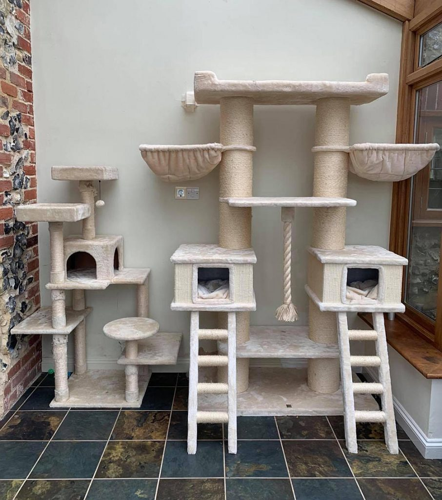 Two examples of Maine Coon cat trees.