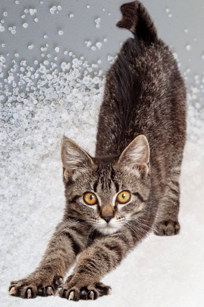 A grey tabby cat stretching with an image of rock salt in the background.