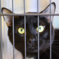 A black cat peering out of a crate.