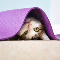 A cat suddenly avoiding its owner by hiding under a mat.