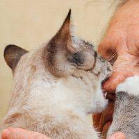 A cat biting a man's nose.