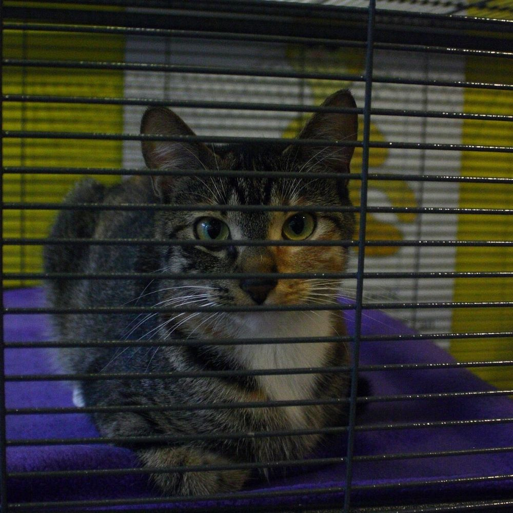 A cat loafing in a crate.