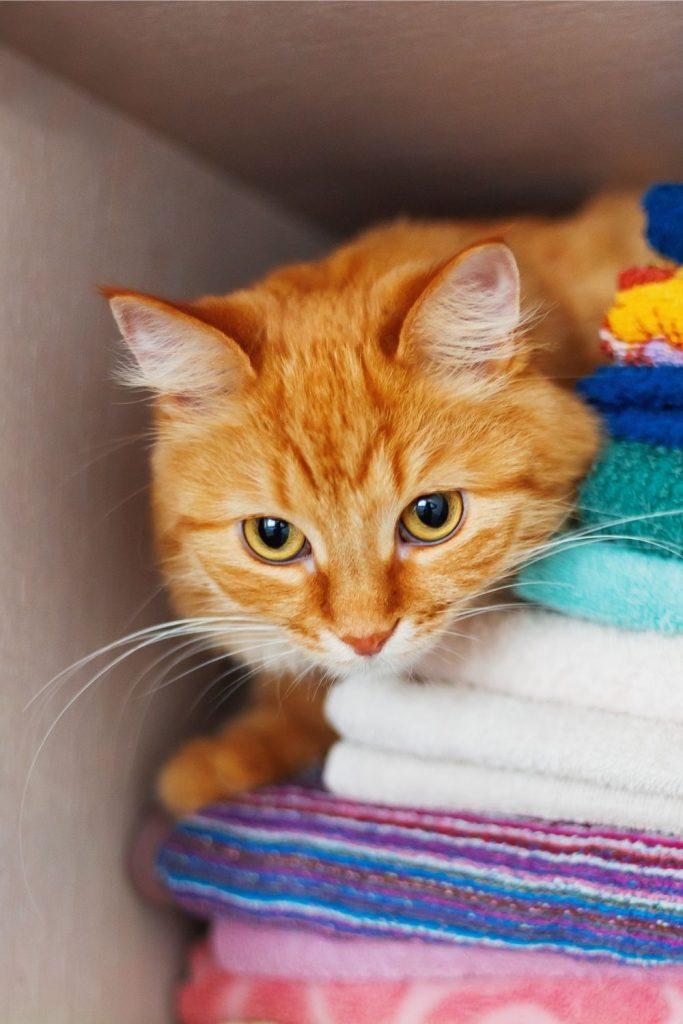 A cat hiding in a linen cupboard.